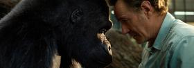 DER EINZIG WAHRE IVAN: Tierische Filme exklusiv auf Disney+